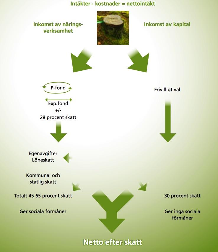 Avverkning av skog - privat avverkning eller näringsverksamhet? Vad blir skatten när man fäller träd på en privat tomt?